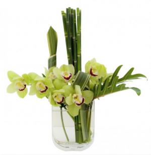 Cymbidium Simplicity Vase Arrangement, Modern in Brattleboro, VT | WINDHAM FLOWERS