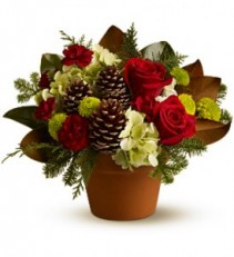 Cymbidium Sparkle Holiday Arrangement, Compact