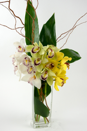 Cymbidium trio One side