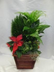 Cyprus Planter Plant  basket