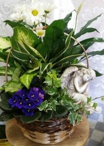 D-Angel, Violet & plants basket