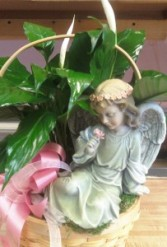D137 angel & peace lily