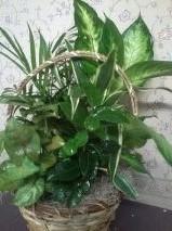 D2030 planter
