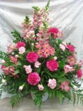 D359 pink tones