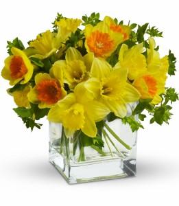 Daffodil Dreams H1403A