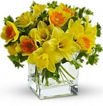 Daffodils Arrangement