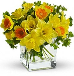 Daffodils Arrangement