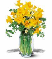 Daffodils, Dammit!