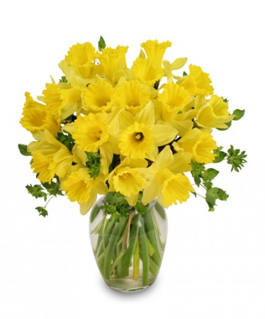 Daffodils Spring flowers