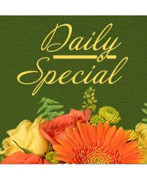 Daily Special Custom Design