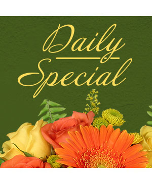 Daily Special Custom Design in Charlotte, NC | FLOWERS PLUS