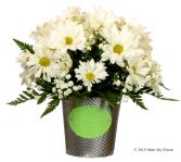 Dainty Daisies Floral Arrangement in Colusa, California | Richie's Florist