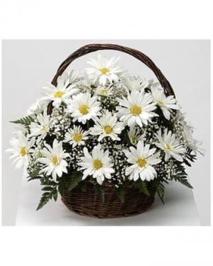 daisies in a basket  in Lebanon, NH | LEBANON GARDEN OF EDEN FLORAL SHOP
