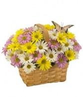 Daisy A Day Basket