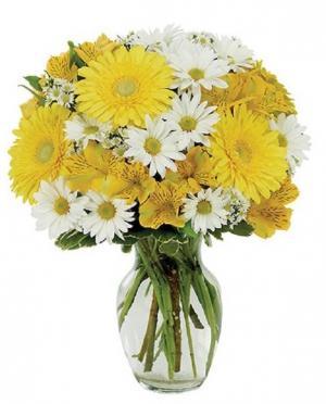Daisy A Day Bouquet  in Arlington, TX   Erinn's Creations Florist