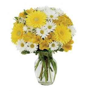 Daisy A Day Bouquet Item #169-11KM in Arlington, TX | Erinn's Creations Florist