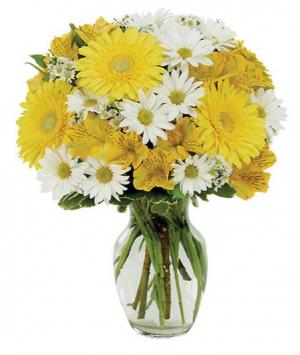 Daisy A Day Bouquet  sku # BF169-11KM in Arlington, TX | Erinn's Creations Florist