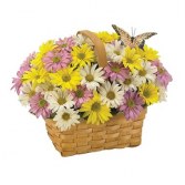 Daisy A Day Spring Basket Arrangement