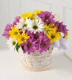 Daisy Basket Arrangement in Powell, OH | MILANO FLORIST