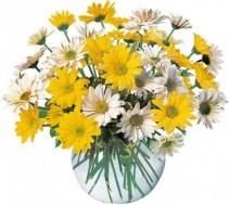 Daisy Bubble Bowl Flower Arrangement