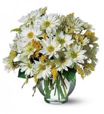 Daisy Cheer                          TF58-3 vase arrangement