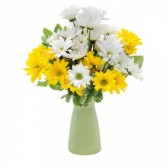 Daisy Craisy Arrangement