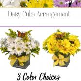 Daisy Cube-Designer's Choice