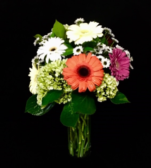 Daisy Dance Mix Colors of Daisies  in Plainview, TX | Kan Del's Floral, Candles & Gifts