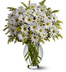 Daisy Days 407 Vase arrangement