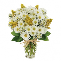 Daisy Delight Arrangement
