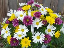 Daisy Delight Basket of Daisy's