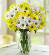 Daisy DeLiteFull Clear Vase Arrangement