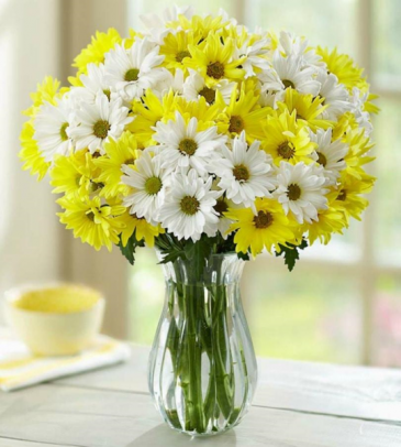 Daisy Delitefull Clear Vase Arrangement In Nampa Id Flowers By My