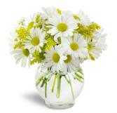 Daisy fields vase