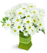 Daisy Fresh - 1048 Vase arrangement