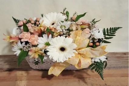 Daisy Garden  Shop Special