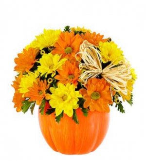 DAISY PUMPKIN SPECIAL OF THE MONTH  in Saint Cloud, FL | Bella Rosa Florist
