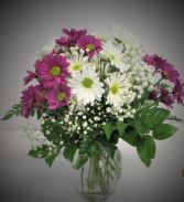 DAISY SIMPLE AND SWEET  FRESH FLOWERS VASED