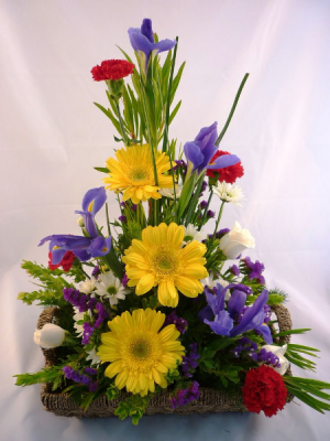 Daisy Trio Arrangement in Cherokee, IA | Blooming House
