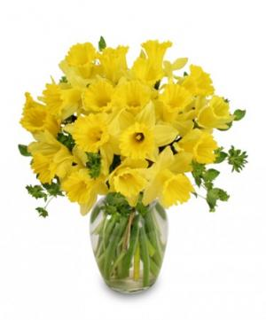 Dancing Daffodils in Season  *availability may be limited  in Chatham, NJ | SUNNYWOODS FLORIST