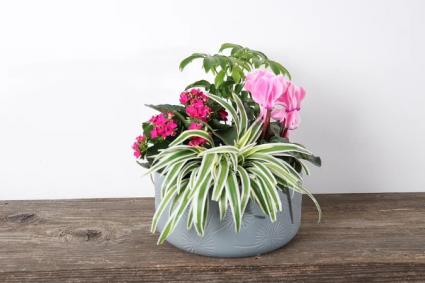 Mom's Secret Garden Tropical planter