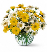 Dashing Daisies  Fresh arrangenment
