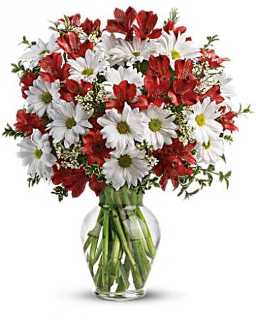 Dasie and Alstromeria Fresh Flowers