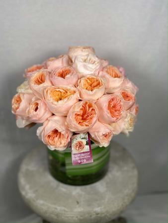 David Austin Roses -Juliet