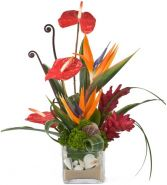 DAYDREAMER  A STYLSIH TROPICAL  ARRANGEMENT