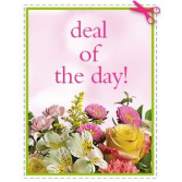 Deal of the Day Basket