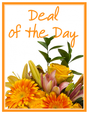 Deal of the Day Arrangement in Swannanoa, NC | The Asheville Florist