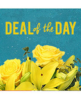 Deal of the Day Designer's Choice