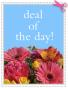 Deal of the Day Custom - Designer's Choice