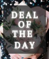 DEAL OF THE DAY  DESIGNER'S CHOICE ARRANGEMENT